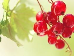 Красносмородиновый сок в медицине